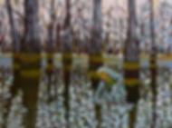 Swamp Julie Rea