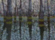 swamp landscape smaller.jpg