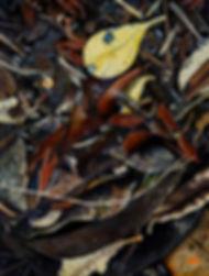 Leaves bugs painting julie read