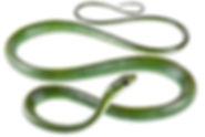 Chironius monticola
