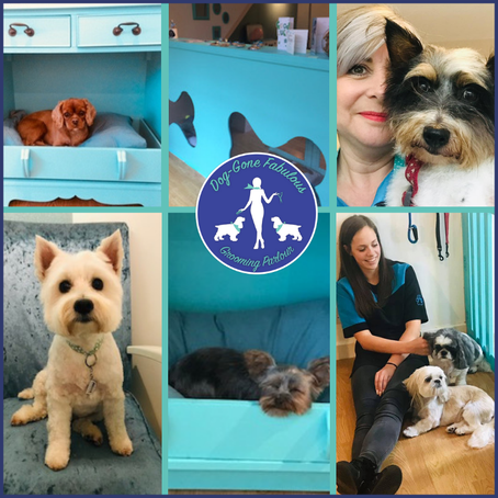 WOW It's Day 17  And it's time to meet the gorgeous pooches and Vicky from Dog Gone Fabulous !