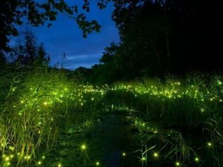 Passeggiare tra le lucciole