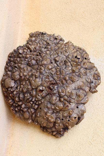 Mushroom Field (SOLD)