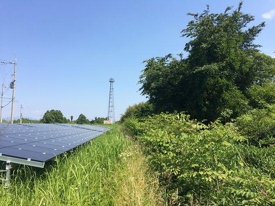 太陽光発電所雑草