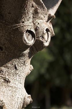 Andalūzijas acis