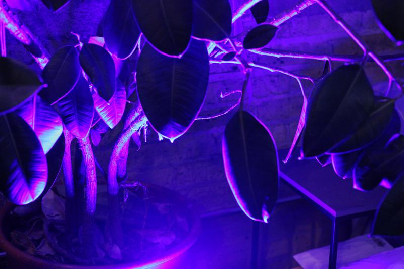 Purple Plants | Meghan Stark