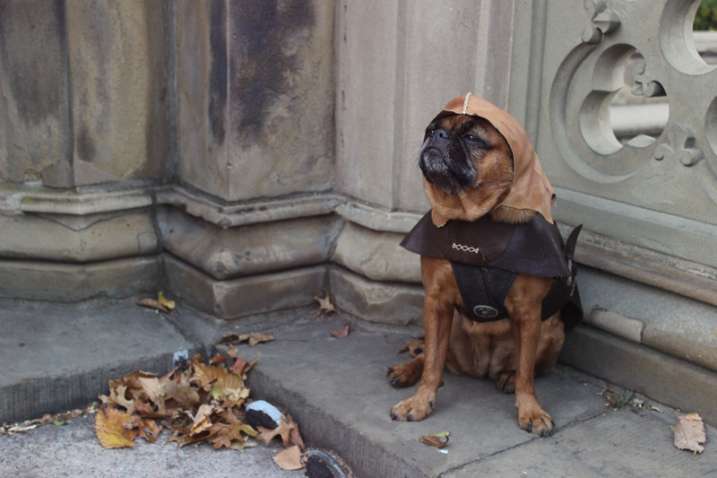 Major the Brussels Griffon, Squire   Meghan Stark