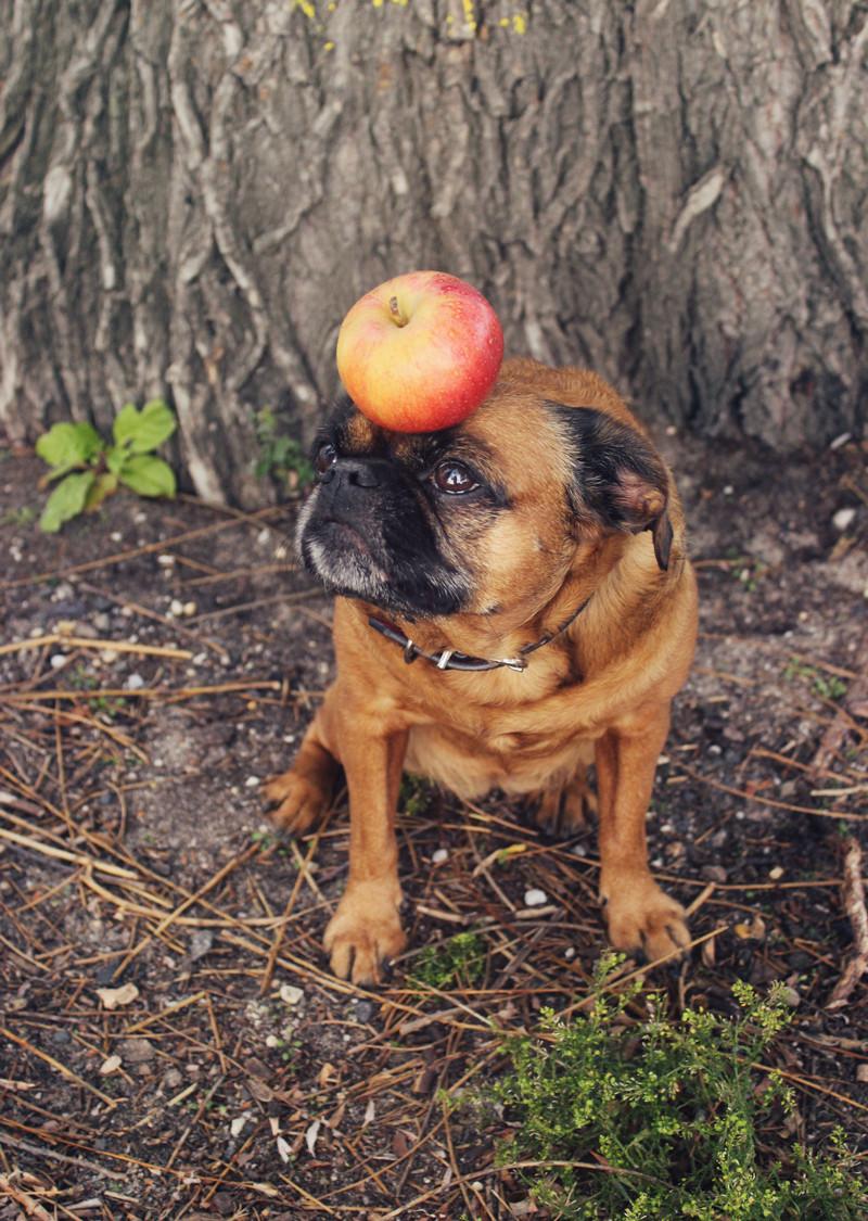 The Big Apple   Meghan Stark