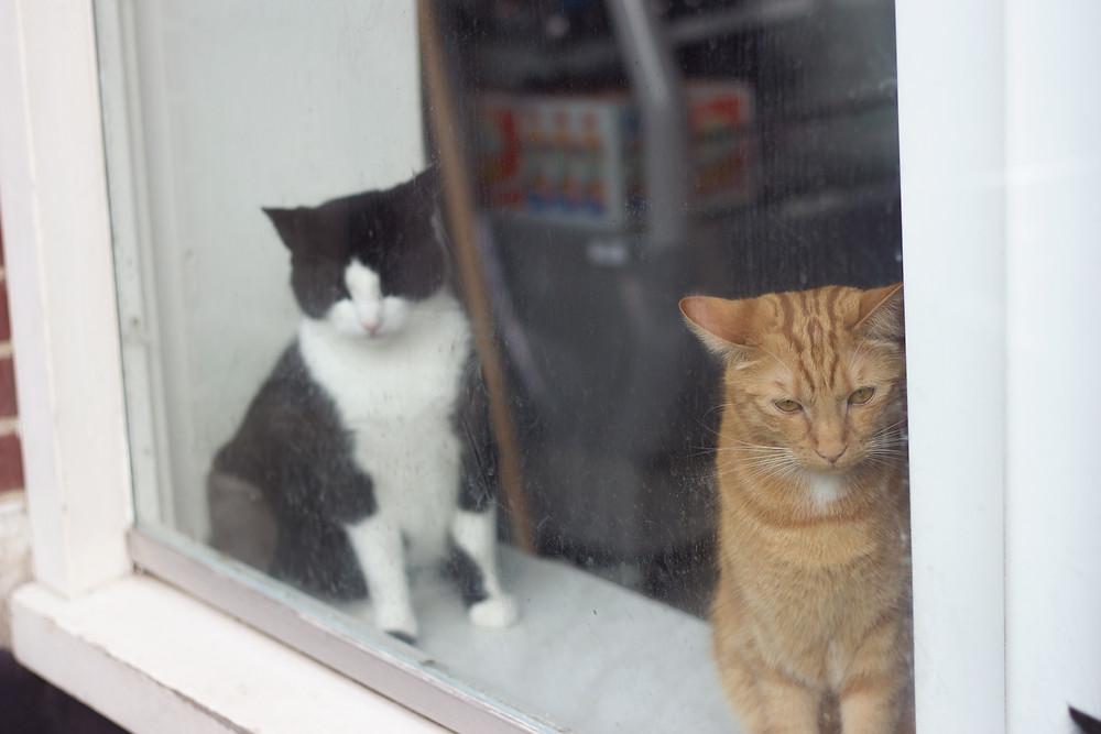 Window Cats | Meghan Stark