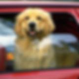 driving-wtih-pets-in-car.jpg