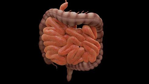 intestine-4413737_1920.jpg