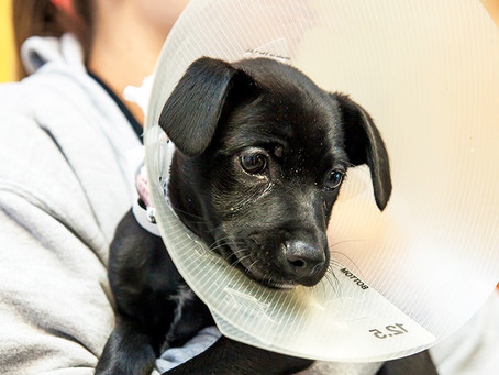 Why should you spay and neuter your pets?