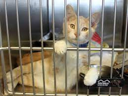 Why do pets end up in shelters?