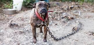 Understanding animal neglect and cruelty