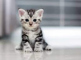 New Kitten Checklist