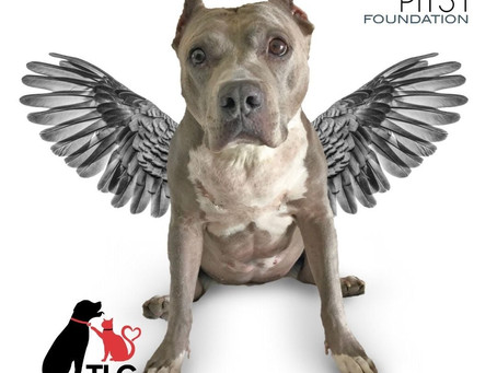 Free Spay/Neuter for Bully Breeds