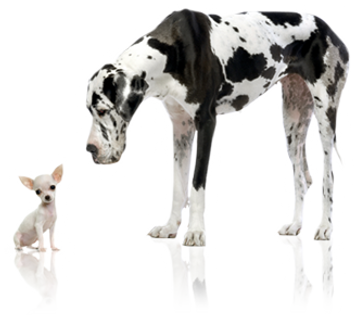 home_content_dog_new.png
