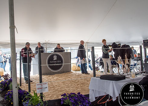 Favorites of Fairmont Holstein Sale