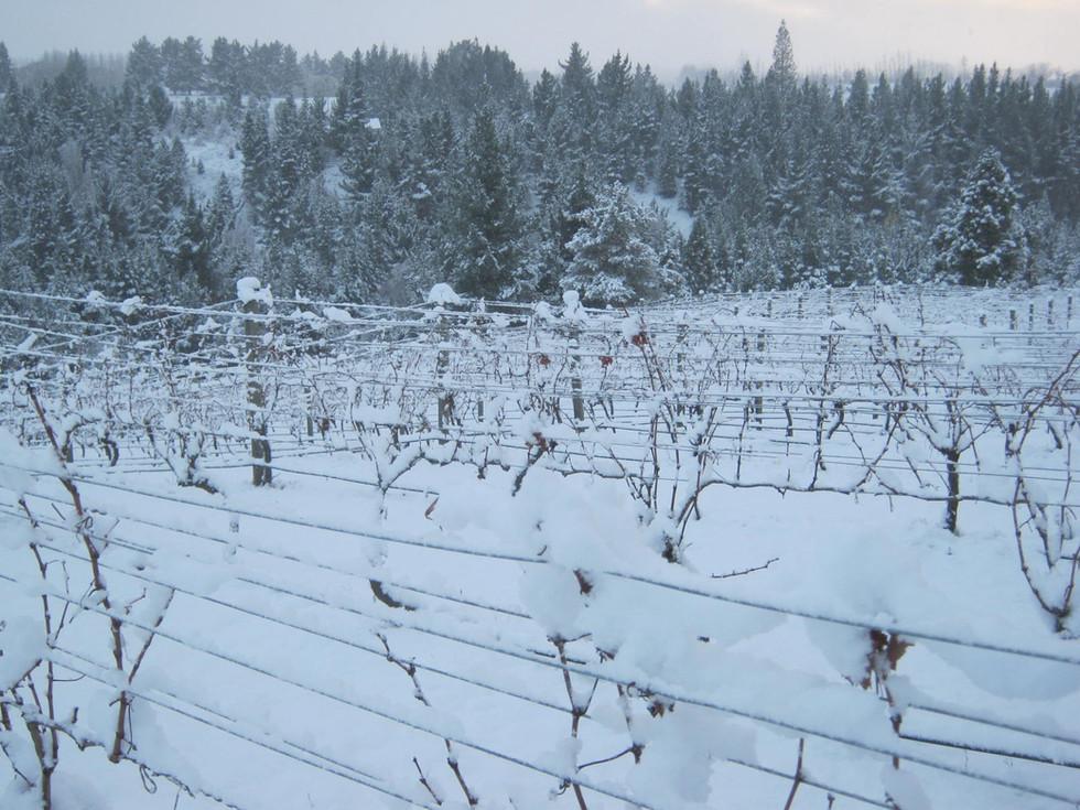Dormant vines