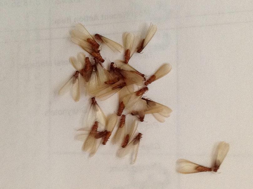 Clark Pest Remedy Termite Real Estate Reports