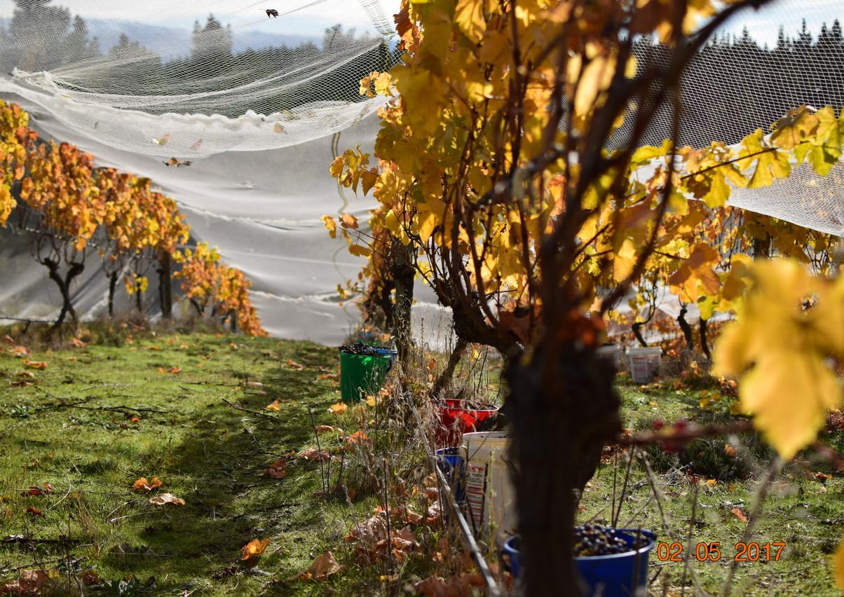 Harvest scenes