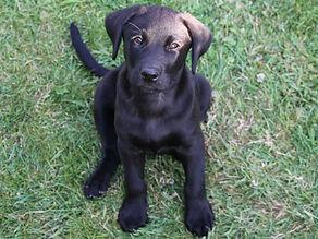 Moss puppy