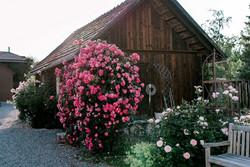 Holzhütte_verkleinert