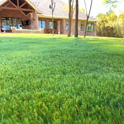 Low Maintenance Artificial Lawn