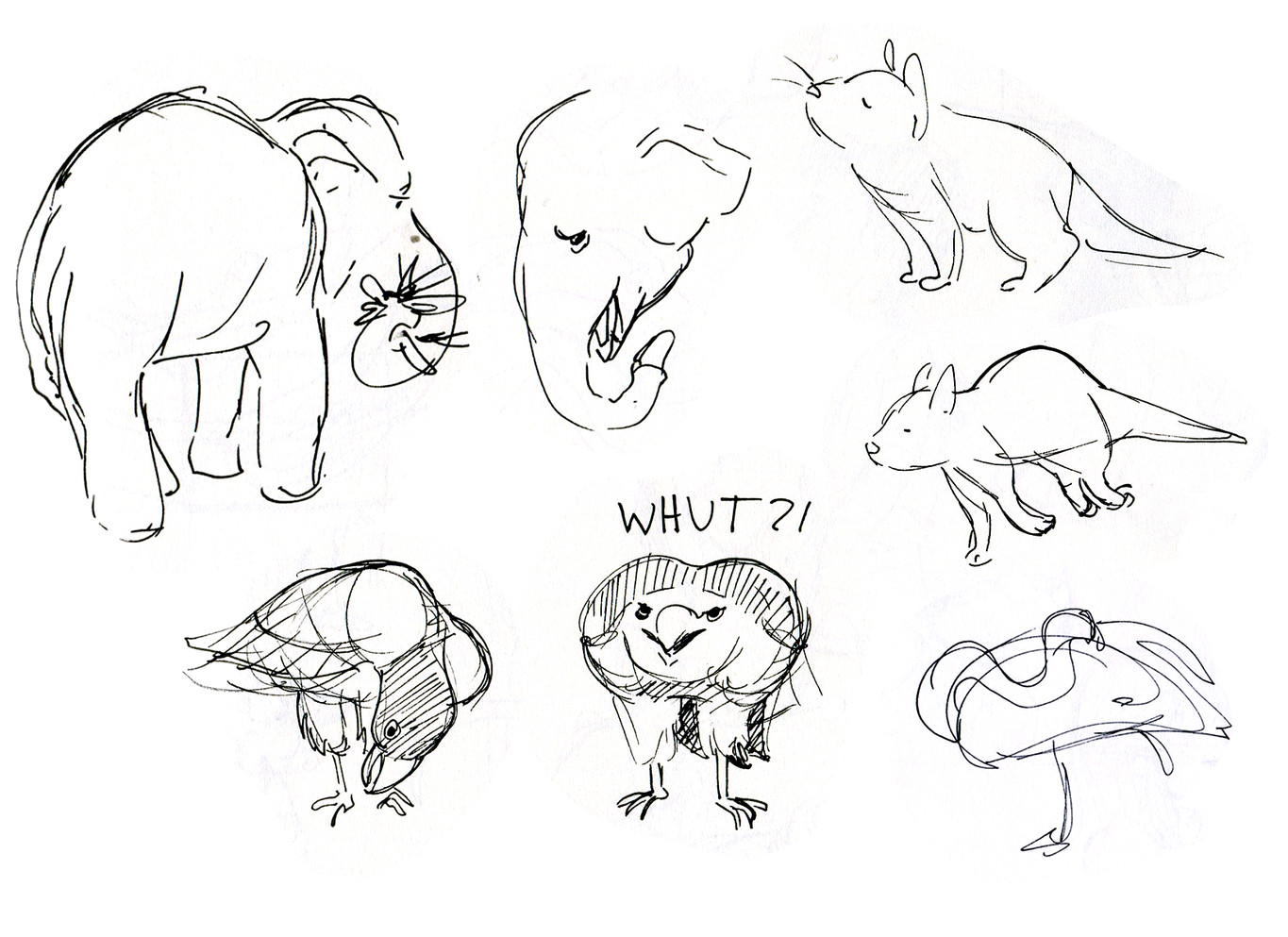 Zoo Sketches