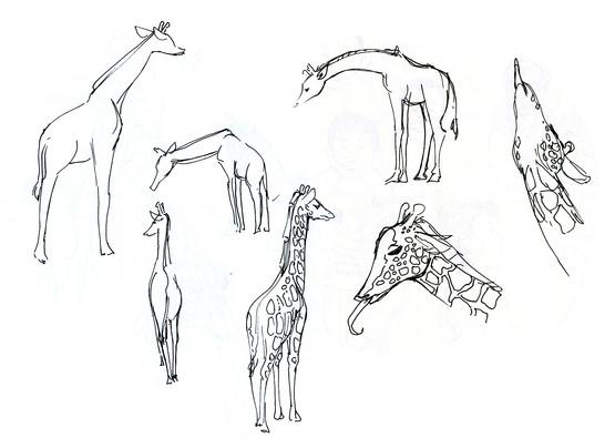 zoo sketchbook page 1.jpg