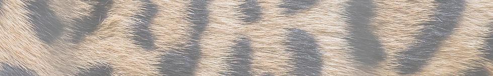 Textura animal.jpg
