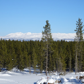 Rendezvous Ski Trails in West Yellowstone — Great for all skill levels