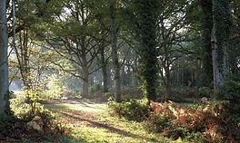 woodland 6.jpg