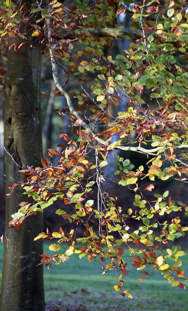 leaves 23.jpg