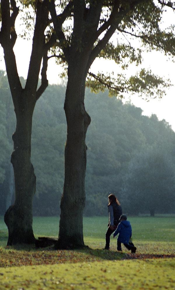 tall tree 20.jpg