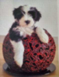 puppy6.jpg