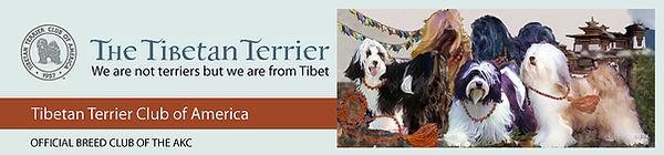 tibetanterrierclubheader.jpg