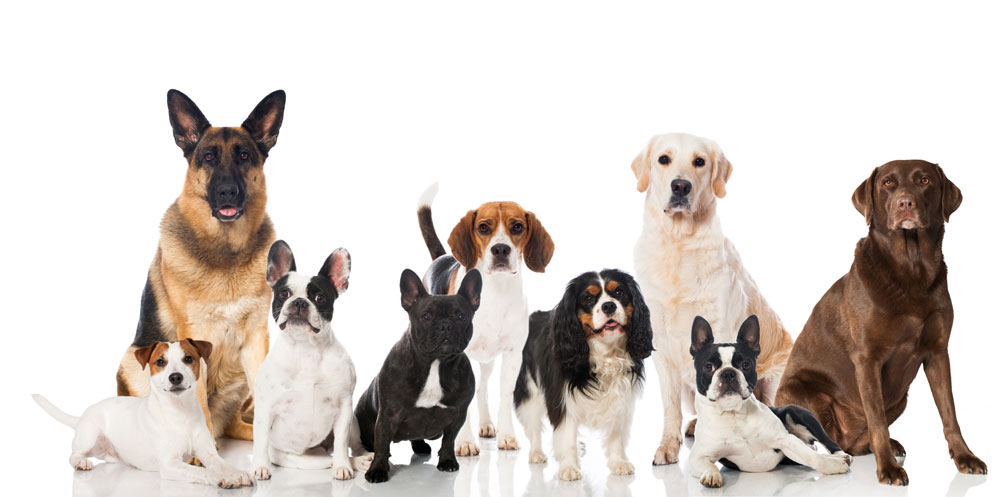 shropshire-dog-grooming