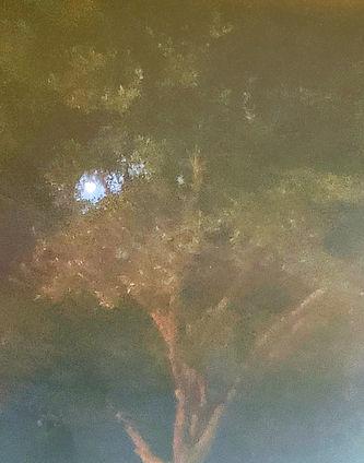 tree with moon.jpg