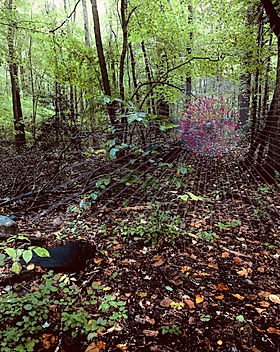 video33forest.jpg
