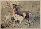Allen W Seaby, Goats