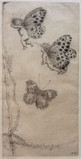 Katharine Cameron, Butterflies