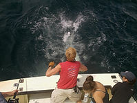 Cape Cod Dennis Sportfishing
