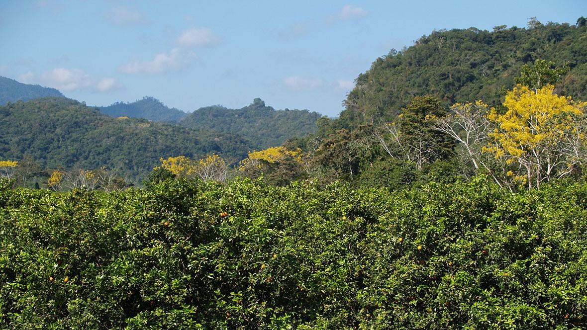 toledo jungle 1