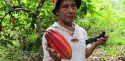 cacao farmer landscape