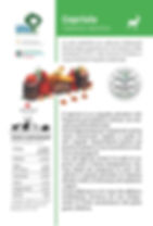 SchedaCapriolo_Print.jpg