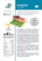 SchedaCinghiale_Print.jpg