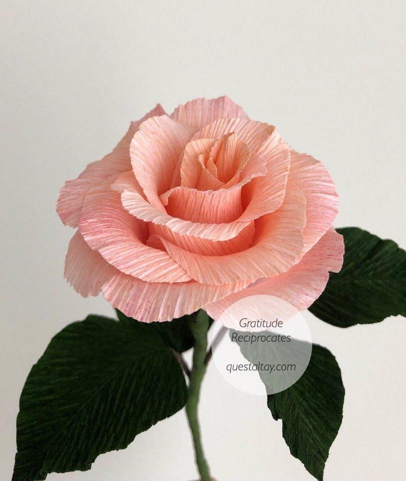 THE ROSE $13/stalk