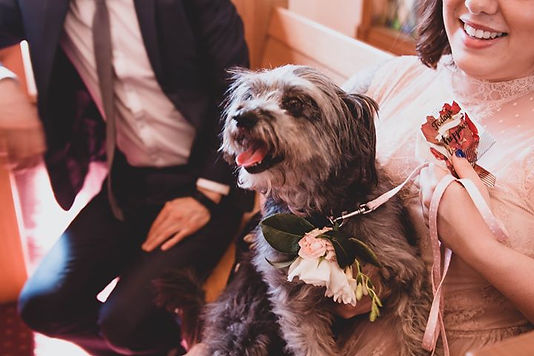 Melbourne dog wedding chaperones