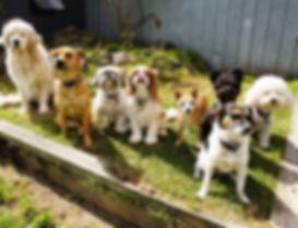 Blackburn Doggie Daycare